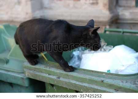 Cats walking on old rusty garbage container. Antique stone house - stock photo