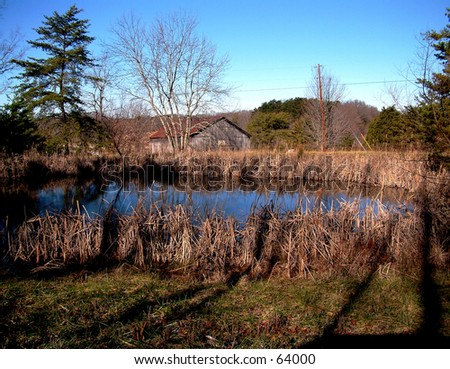 Cattails and Pond - stock photo