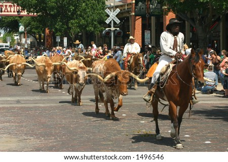Cattle drive - stock photo