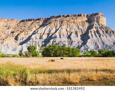 Cattle graze by shale and sandstone hills at Caineville Mesa in the badlands east of Utah's Capitol Reef National Park. - stock photo