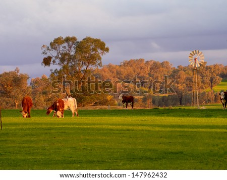 cattle grazing with a windmill in background - stock photo