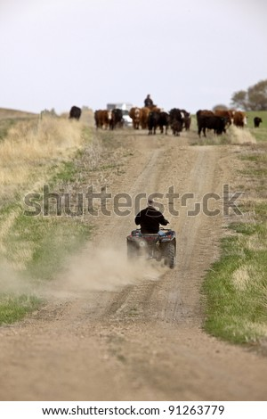 Cattle Herding Saskatchewan Canada - stock photo