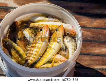 Caught fish in a bucket on the deck - stock photo