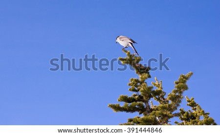 Caught in motion, a small bird is on the verge of taking off from a tree branch.  - stock photo