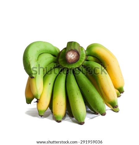 Cavendish bananas are the fruits of banana cultivars belonging to the Cavendish subgroup of the AAA cultivar group. - stock photo