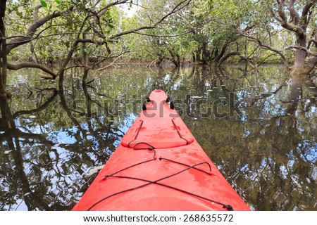 Cayaking in a mangrove forest in Paihia, New Zealand, at rising tide - stock photo