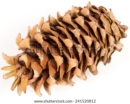 Cedar cone. The mature cedar cone with seeds. The isolated image.  - stock photo