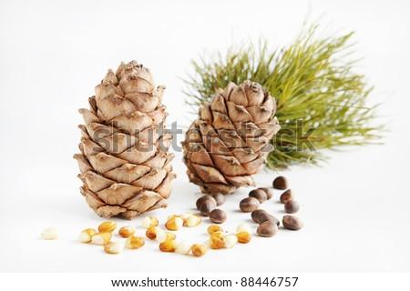 Cedar cones and nuts - stock photo