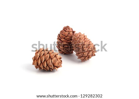 Cedar cones with droplets of resin - stock photo