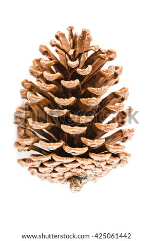 cedar pine cone on white background - stock photo