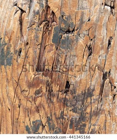Cedar wood grain detail - stock photo