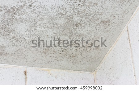 Ceiling mold shown on the interior of a white tiled bathroom a common source of unhealthy damage and decay that forms when fungus grows in a poorly ventilated room.