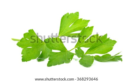 Celery isolated on the white background .