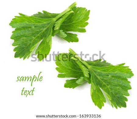celery leaves closeup over white with space text