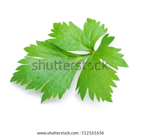 Celery or parsley leaf isolated on white background.