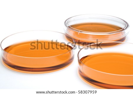 Cell culture dishes - stock photo