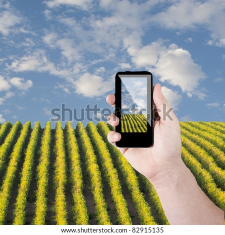Cell phone in hand take photo of beautiful green grass view - stock photo
