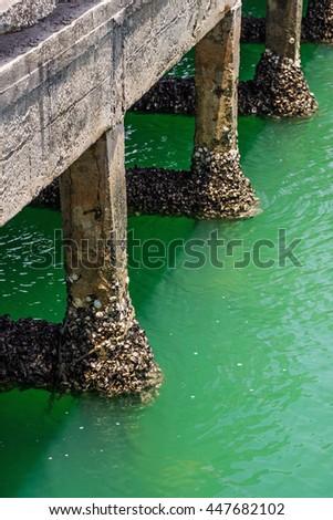 Cement pole of the fishing bridge with barnacle seashell - stock photo