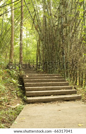Cement stairs explore nature paths. - stock photo