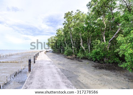 Cement walkway nature trail mangrove forest. - stock photo