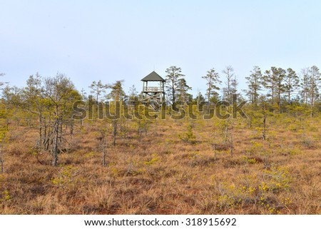 Cenas bog in Latvia. Special Area of Conservation - stock photo