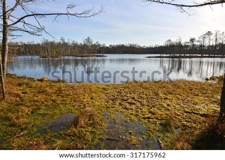 Cenas bog lake in Latvia. Special Area of Conservation - stock photo