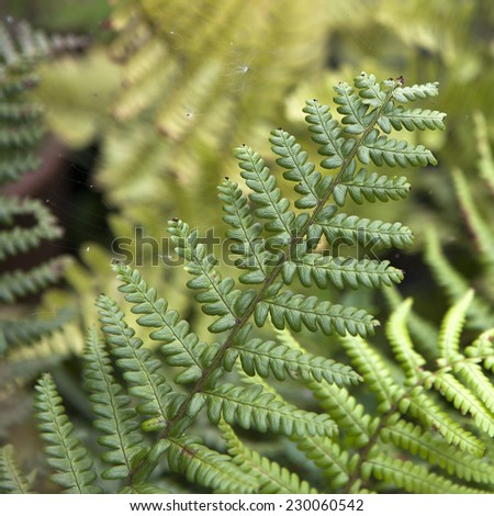 Center of fern leaf in Thailand - selective focus - stock photo