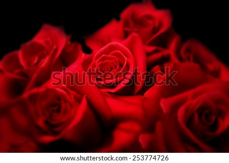 Center of roses. Deep red roses on black background. Focus is on center red rose. Surrounding roses are Intentionally soft focused.   - stock photo