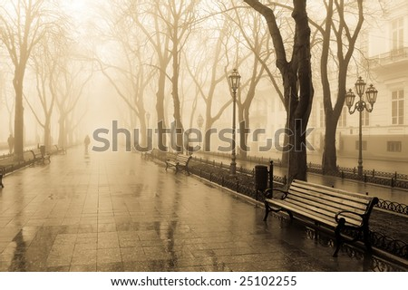 Central alley at mourning - stock photo