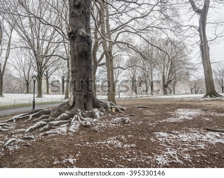 Central Park, New York City in spring with Magnolia trees - stock photo