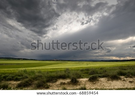 Cereal Fields - stock photo