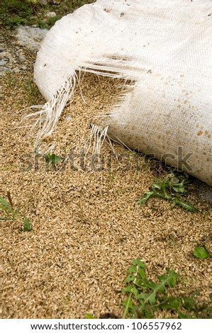 Cereal grain running out of a torn sack - stock photo