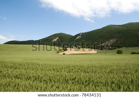 Cereal landscape in front of the mountains
