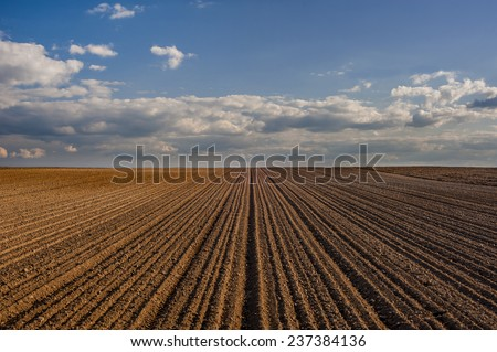 Cereal spring field with seeds cropped in rows and blue sky background - stock photo