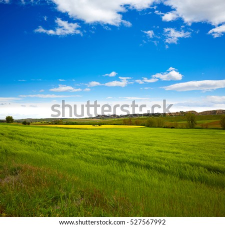 Cereal spring fields in Castilla by the way of Saint James at Via de la Plata of Spain