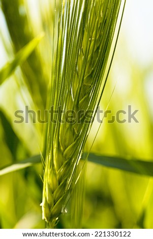 cereals (close up)  - stock photo