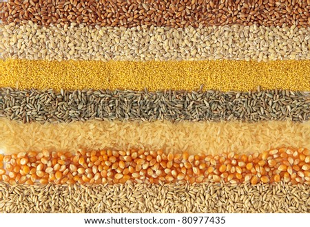 Cereals - ,wheat, barley, millet, rye, rice,maize and oats - stock photo