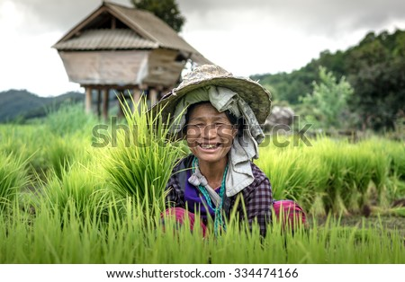 Chaimai, Thailand July 23 At country Village, Farmers are harvesting rice,on 23 July 2015 - stock photo