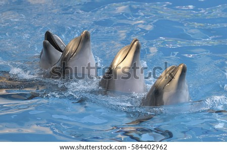 Chain of four dolphins dancing in dolphinarium