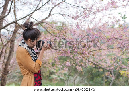 CHAINGMAI, THAILAND - JANUARY 18: An unidentified women view Prunus cerasoides garden. The festival is spring celebration of Thailand on January 18, 2015 in Chaingmai, Thailand.   - stock photo