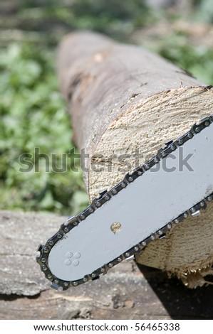 Chainsaw blade against a fresh cut wood - stock photo