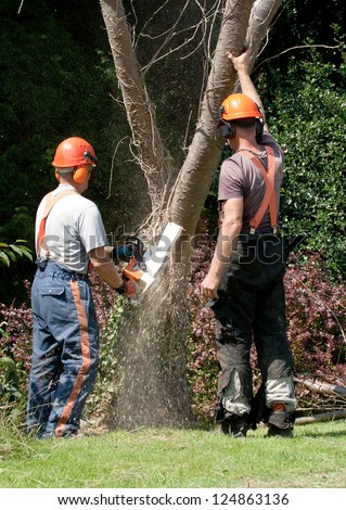 Chainsaw embedded in tree trunk, men standing by