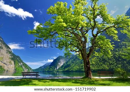 Chair under big green tree at Konigsee at Berchtesgaden, Bavaria, Germany - stock photo