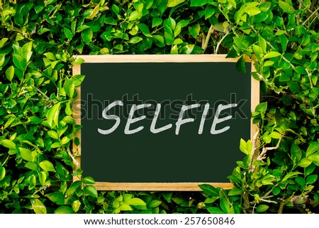chalkboard on spring summer green leaves background.  - stock photo
