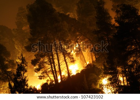 CHALKIDIKI, GREECE - AUGUST, 21 : Forest fire disaster on August 21, 2006 Chalkidiki Peninsula, northern Greece - stock photo