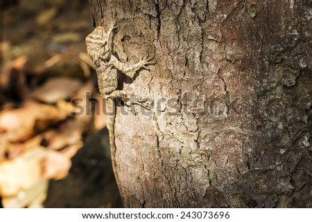 Chameleon on the tree - stock photo