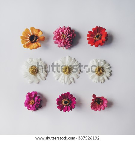 Chamomile and other flowers at white background. Flat lay, top view - stock photo