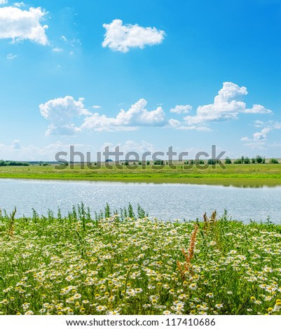 chamomile closeup and green landscape with river and blue sky - stock photo