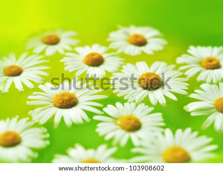Chamomile flowers in aromatherapy bowl - stock photo