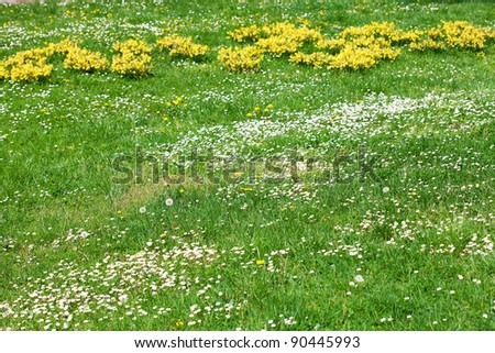 chamomile, snowdrops and dandelions on the background of green grass - stock photo